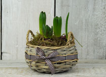 Wicker and Woven Baskets