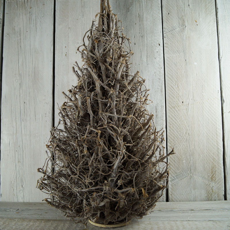 Rooted Christmas Tree