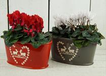 Christmas Planters detail page